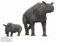 Paraceratherium - Google Search