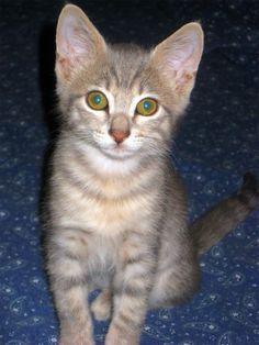 My evil cat, Mizuiiro.
