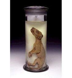 "Thylacine ""Tasmanian Tiger"" Pup (Thylacinus cynocephalus) - Wet Specimen. Extinct Circa 1936. Native to Australia."