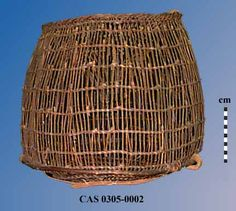 Barrel shaped eel trap with flat base and slightly rounded sides; Woven entirely in widely spaced, 2-strand open twining; Warp rods are bent over at rim and braided, then bent inward and down forming a funnel opening; Reinforcing rod is attached around lower side and 3 vertical reinforcing rods are attached to exterior side of trap; Single reinforcing rod extends across exterior base; No design. Height = ca. 52.5 , Rim Diam = 48.0, Max Diam = ca. 61.0