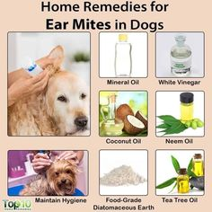 Excellent Natural health remedies info are offered on our web pages. Take a look… – Pet Health Top 10 Home Remedies, Cold Home Remedies, Natural Health Remedies, Natural Cures, Herbal Remedies, Pet Health, Health Tips, Health Benefits, Mites On Dogs