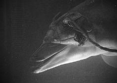 Jones el delfín (Johnny Mnemonic)   CiFiPoemas