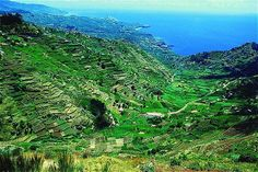 Landscape in Madeira island, Portuga - Madeira Wine   George Washington was a great fan of Madeira wine. Both his inauguration and the signing of the Declaration of Independence were celebrated with Madeira wine. The legendary frigate Constitution was christened with Madeira wine. New England's own President Franklin Pierce spent several months exploring the island with his wife after leaving office in 1857.