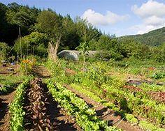 Mischkultur im Garten: Wer verträgt sich mit wem?