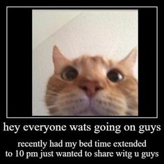 Cat Memes, Dankest Memes, Funny Memes, Funny Videos, Funny Laugh, Haha Funny, Infj, Morning Memes, Me Too Meme