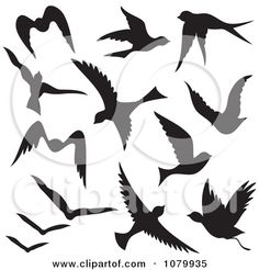 Swallow Bird Tattoo Vector Silhouette Flying Birds Find Similar Images