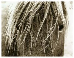Hyden Rustic Lodge Modern Blonde Horse Photo Wall Art - Unframed - Transitional - Artwork - Kathy Kuo Home