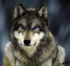 Wolf--love the eyes