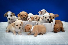 Baldwin Park Animal Shelter in the Spotlight Thanks to Puppy Cam