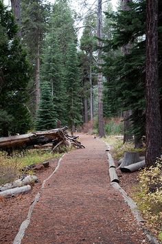 Want to see the best places to hike in Truckee? Visit: http://www.truckee.com/explore/play/Hiking+%26+Biking/ Nature Trail by cmccarty87, via Flickr.