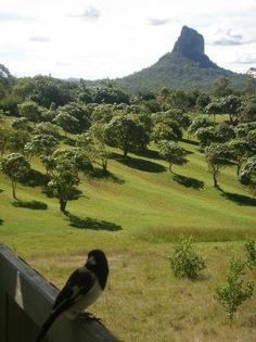 Glass House Mountains, #Australia: view of Mt Coonowrin from The Lookout Cafe http://www.tripadvisor.com.au/ShowForum-g255067-i460-Queensland.html
