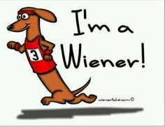 Ball Former Ch ion Wiener Dog Looks Reclaim Title in addition Wiener Dog Racers also Buda  Texas furthermore Dachshund  mercial Art furthermore Wiener Dog National Races In San Diego. on weiner dog races los alamitos