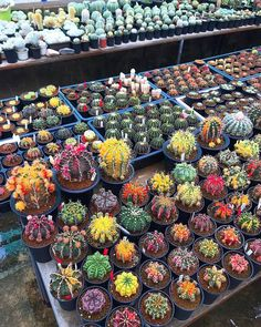 Mini Cactus Garden, Vertical Garden Plants, Cactus House Plants, House Plants Decor, Cactus Flower, Plant Decor, Succulent Terrarium, Cacti And Succulents, Planting Succulents