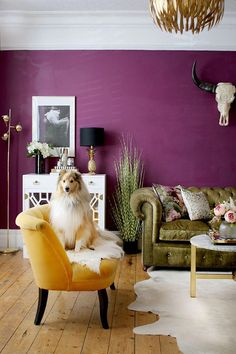 6 Decorating Rules You Can Totally Break - Swoon Worthy dark purple living room with green and yellow sofas and Sheltie dog on sofa Living Room Green, Living Room Colors, Living Room Sofa, Living Room Designs, Purple Living Rooms, Dark Purple Rooms, Green And Purple, Dining Rooms, Murs Violets