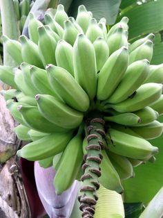 Ile de la Réunion - fruit