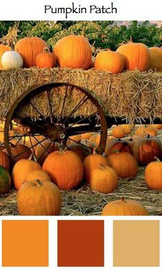 Pumpkin Patch • My Top Fall #Color Palettes
