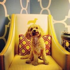 Dogs At Hotel Monaco Philadelphia Have Tons Of Stylish Photo Opportunities All Kimpton Hotels Are