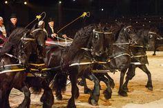 2017 első látványos fríz showját Hollandiában, aKFPS Royal Friesian védnöksége alatt kerül megrendezésre január 12-13