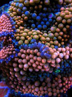 Mushroom coral macro - takes my breath away...