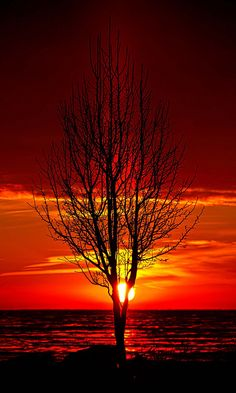 ♂ beautiful nature lonely Tree red Sun rise