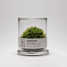 The Mosser is a small glass terrarium filled with a simple round moss ball. The Mosser comes with a glass mister bottle used to feed your plant. They are very easy to care for and only need to be sprayed once every two weeks with filtered wate Green Plants, Air Plants, Indoor Plants, Moss Terrarium, Terrarium Ideas, Terrariums, Terrarium Centerpiece, Moss Garden, Paludarium