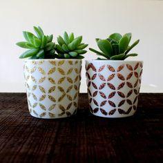 Little Succulent Pots