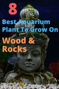 In this article, I'm going to show you the best aquarium plants that grows on driftwood and rocks. Mpst of these plants arevery easy to care for. Fish Aquarium Decorations, Aquarium Setup, Diy Aquarium, Aquarium Filter, Aquarium Ideas, Aquarium Design, Planted Aquarium, Freshwater Aquarium Plants, Live Aquarium Plants