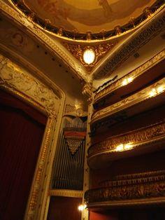 Teatro Municipal I São Paulo I Brasil  #brazil #sãopaulo #sampa #sp #turismo #travel #trip