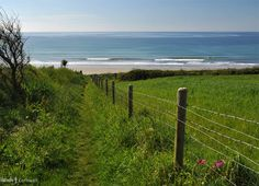 Path from Pendower Beach to Nare Head, Cornwall