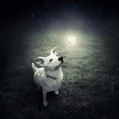 A light...
