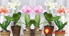 liter vody a lyžička ricinového oleja  Ako podporiť kvitnutie izbových rastlín? Vyskúšajte trik skúsených záhradkárov!