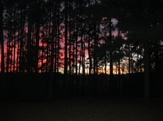 Lake Jacksonville Sunset...So Artistic!