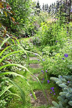 Näkösuoja puutarhaan | Viherpiha