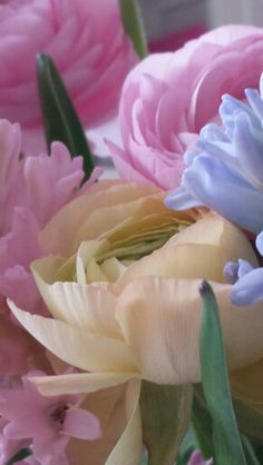 Voorjaars bloemen♡♡♡