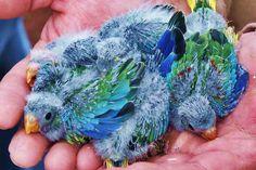 How Do Wild Parrots Raise Their Babies?