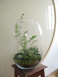 Have a little terrarium but want a huge one!