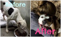 5 Before and After Photos of Rescued Dogs That Will Warm Your Heart