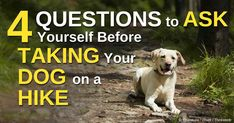 Here are some things to consider before you and your dog go hiking. http://healthypets.mercola.com/sites/healthypets/archive/2014/09/15/hiking-with-dogs.aspx