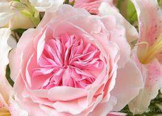 English rose. Clay handmade flowers. Композиции : Букет с туберозой и английскими розами - В НАЛИЧИИ - Fito Art