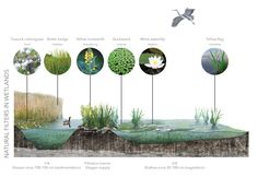Wetland section - own photomontage from school project