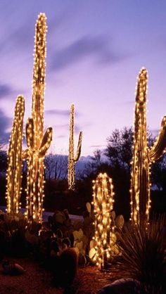 Saguaro Christmas Lights, Arizona