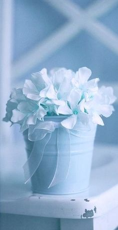 Baby blue flowers.
