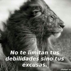 No mas excusas Motivacion Diaria por MorningCoach.com Your Personal Evolution System #alwayspositive