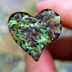 Cannabis: 5 Ways Can Improve The Life Of Seniors Smoking Weed, Medical Marijuana, Happy Valentines Day, Bud, Mary Janes, Amethyst, Instagram, Ganja, Fotografia