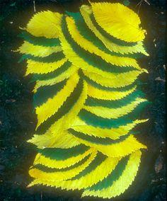 Leaf art by Andy Goldsworthy