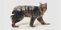 Double Exposure • Mountains & Agility • Artic Lynx by Andreas Lie •
