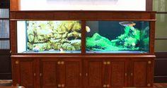 Bể cá rồng - Bể cá cảnh - bể thuỷ sinh - bể treo tường - bể cá nước mặn - hồ cá koi