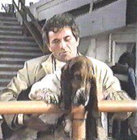 Columbo and bassethound Fred. Basset Hound Dog, Beagle Puppy, Columbo Peter Falk, Cornish Rex, Mountain Dogs, Bernese Mountain, Dog Mixes, Dog Pin, Labrador Retriever Dog