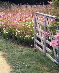 backyard flower farm - Google Search