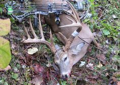 North America's biggest antler-scoring organizations have spoken on the status of record bucks entered into their programs by embroiled Illinois bowhunter Marc Anthony.